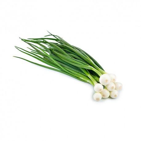 Oignon blanc botte